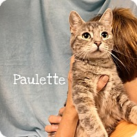 Adopt A Pet :: Paulette - Foothill Ranch, CA