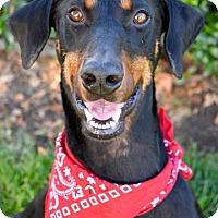 Adopt A Pet :: D'Artagnan - Tracy, CA