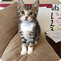 Adopt A Pet :: Mango - Lindsay, ON