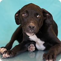 Adopt A Pet :: Mulberry - Waldorf, MD