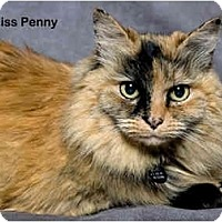 Adopt A Pet :: Miss Penny - Portland, OR