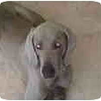 Adopt A Pet :: Romeo  **ADOPTED** - Eustis, FL