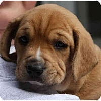 Adopt A Pet :: Christi Marie - Portland, OR