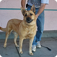 Adopt A Pet :: Rex - California City, CA