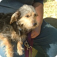 Adopt A Pet :: Dagwood - North Little Rock, AR