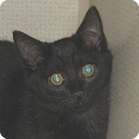 Adopt A Pet :: EGG ROLL - 2014 - Hamilton, NJ
