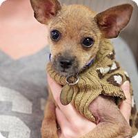 Adopt A Pet :: Phoenix - Marietta, GA