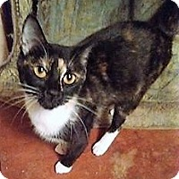 Adopt A Pet :: Moonshadow - Chattanooga, TN