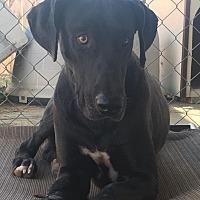 Adopt A Pet :: Rizzo - Oswego, IL