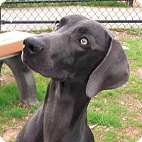 Adopt A Pet :: Hadley - Birmingham, AL