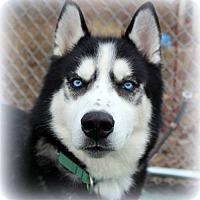 Adopt A Pet :: Aries - Matawan, NJ