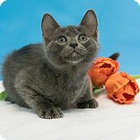 Adopt A Pet :: Brad - Houston, TX