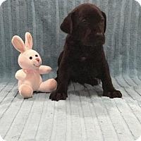 Adopt A Pet :: Josephine 'Josie' - Denton, TX
