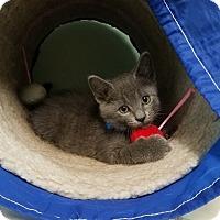 Adopt A Pet :: Goffin - Murphysboro, IL