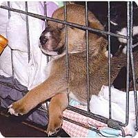 Adopt A Pet :: Frazier - Flint (Serving North and East TX), TX