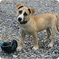 Adopt A Pet :: Blaze - Pike Road, AL