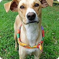 Adopt A Pet :: Honey - Zebulon, NC