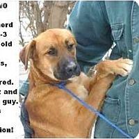 Adopt A Pet :: # 698-10 @ Animal Shelter - Zanesville, OH