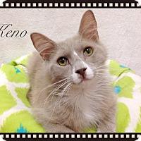 Adopt A Pet :: Keno - Foothill Ranch, CA