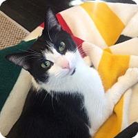 Adopt A Pet :: Anita - Los Angeles, CA