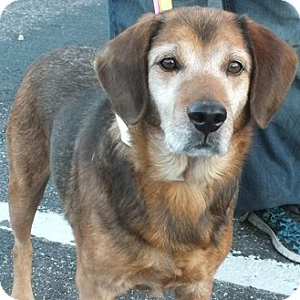 Shepherd (Unknown Type) Mix Dog for adoption in Minneapolis, Minnesota - Buddy