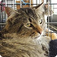 Adopt A Pet :: Jameson - Sullivan, MO