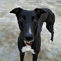 Adopt A Pet :: Carson - Swanzey, NH