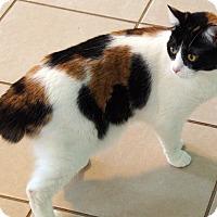 Adopt A Pet :: Pandora - Maynardville, TN