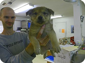 Shepherd (Unknown Type) Mix Puppy for adoption in Waldorf, Maryland - Mufasa