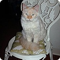 Adopt A Pet :: Brandy baby blue - NEWCASTLE, CA