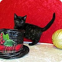 Adopt A Pet :: Kimba - Orlando, FL