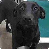 Adopt A Pet :: Emerald (Emmy for short) - Garwood, NJ