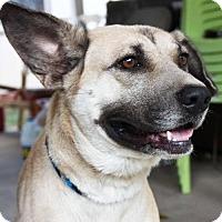 Adopt A Pet :: Sparticus - Cleveland, TX