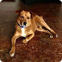 Adopt A Pet :: Teddy - West Hartford, CT