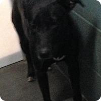 Adopt A Pet :: Fay Wray - Clarkesville, GA