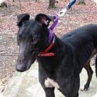 Adopt A Pet :: Walk Withme Stan