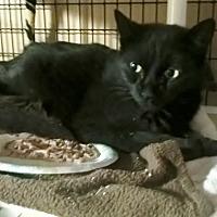 Adopt A Pet :: JEWELS - Brea, CA