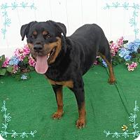 Adopt A Pet :: COOKIE - Marietta, GA