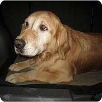 Adopt A Pet :: Sophia - Denver, CO