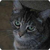 Adopt A Pet :: Mollie - Moses Lake, WA