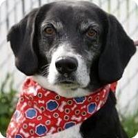 Adopt A Pet :: Bochepus (Bo) - Indianapolis, IN