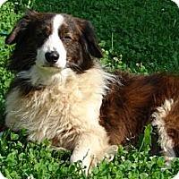 Adopt A Pet :: Freedom - Afton, TN