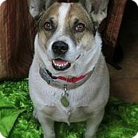 Adopt A Pet :: Valentine - Higley, AZ