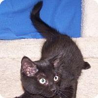 Adopt A Pet :: George B - Colorado Springs, CO