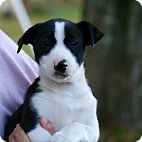 Adopt A Pet :: Juney - Morgantown, WV