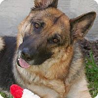 Adopt A Pet :: Sasha - Ormond Beach, FL