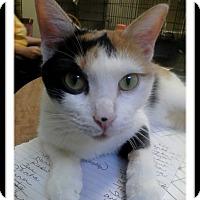 Adopt A Pet :: Artemis - Trevose, PA