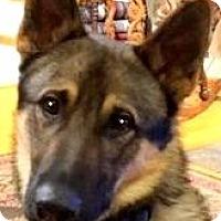 Adopt A Pet :: LINCOLN(LOST HIS FAMILY-READ! - Wakefield, RI