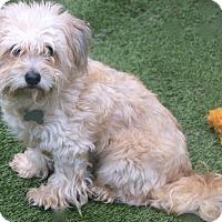 Adopt A Pet :: Abilene - Norwalk, CT