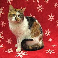 Adopt A Pet :: Sissy - Redwood Falls, MN